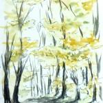 Forêt de Grimbosq - Chemin forestier