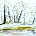 Forêt de Grimbosq - Clairière