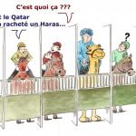 Chevaux - Haras acheté par Qatar