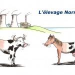 Chevaux - L'élevage normand