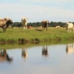 Reflets vaches...