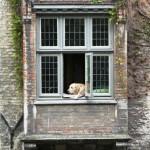 Bruges insolite