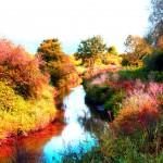 Marais automne